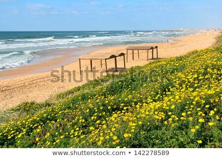Plaża piaszczysta morze Śródziemne morza Izrael widok z góry piękna Zdjęcia stock © rglinsky77