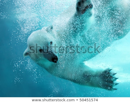 orso · polare · artico · pack · cielo · blu · nube · ghiaccio - foto d'archivio © ifeelstock