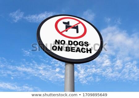 ペット ビーチ にログイン 光 描いた ストックフォト © DonLand