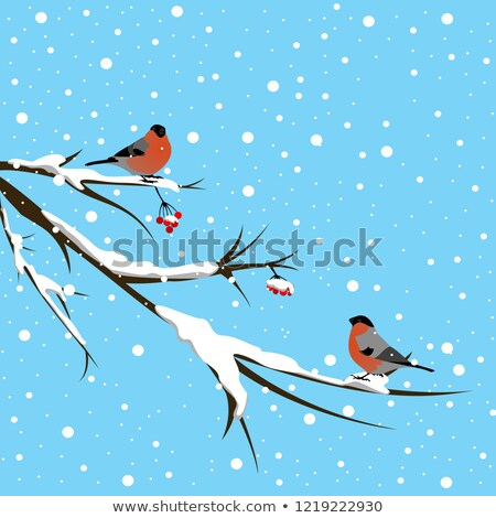bullfinch and mountain ash background stock photo © elmiko