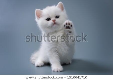 small cat stock photo © taden