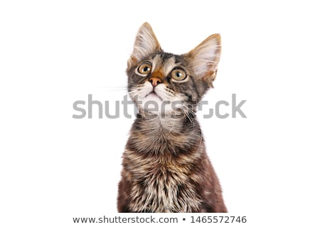 playful kitty stock photo © mkucova