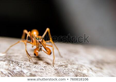 Pók levél természet szem hangya rovar Stock fotó © sweetcrisis