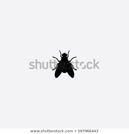 huis · vliegen · behaard · witte · achtergrond · benen - stockfoto © chris2766