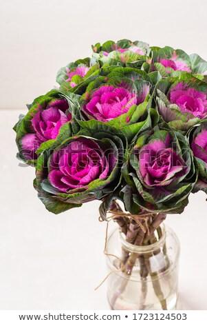Closeup of a purple ornamental cabbage Stock photo © Zerbor