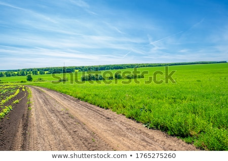 The road through the fields Stock photo © tatiana3337