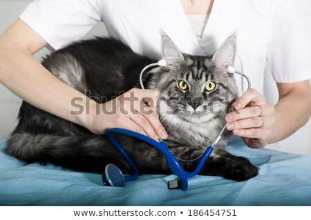 Veterinario examinar Maine mujer médicos de trabajo Foto stock © wavebreak_media