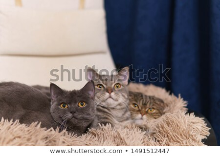 Cute familie ontspannen samen bank kat Stockfoto © wavebreak_media