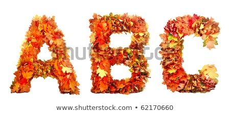 collection beautiful colourful autumn leaves isolated on white b Stock photo © tetkoren