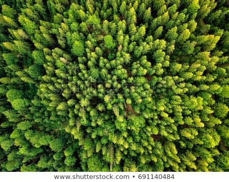 осень лес Румыния красочный пейзаж гор Сток-фото © Fesus