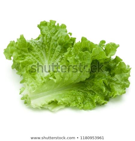 green leaves lettuce Stock photo © ozaiachin