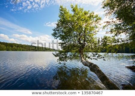 озеро декораций Финляндия Солнечный лет Сток-фото © Juhku