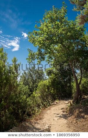 Footpath along coastal cliffs Stock photo © photohome