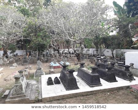 świeże grobu cmentarz drzewo śmierci Zdjęcia stock © zurijeta