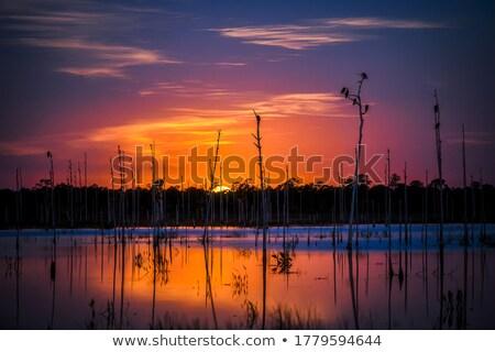 New Zealand zwarte water voorjaar bos landschap Stockfoto © Hofmeester