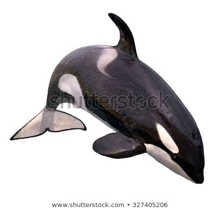 Black Whale Isolated on White Background Stock photo © robuart