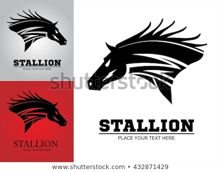 Hairy black wild horse. Great Horse. Horse. Stock photo © HunterX