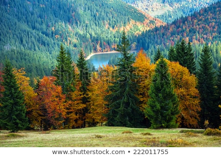 Autumn landscape with deciduous forest in the mountains Stock photo © Kotenko