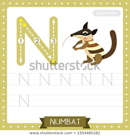 Flashcard letter N is for numbat Stock photo © bluering