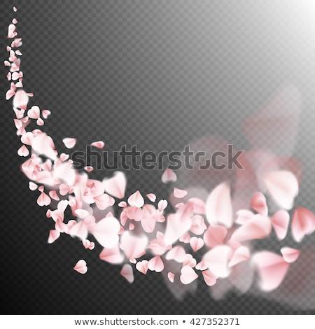 Stockfoto: Sakura · vliegen · bloemblaadjes · donkere · eps · 10