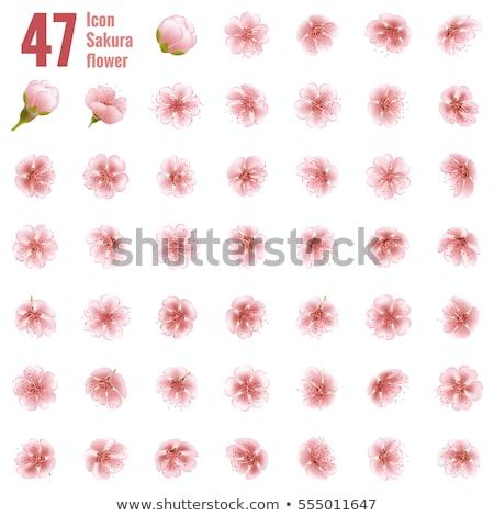 cseresznyevirágzás · ikon · szett · illusztráció · vektor · virág · tavasz - stock fotó © beholdereye