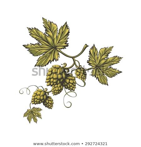 Vektor grafikus szett ikon logo sör Stock fotó © frescomovie