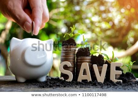Сток-фото: пару · Банки · деньги · природы · безопасности