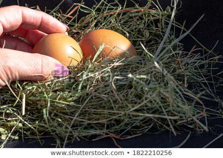 Boerderij vers bruin kip eieren voedsel Stockfoto © shutter5
