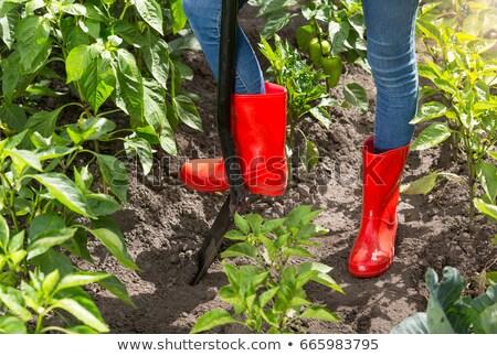 adam · toprak · bahçe · ayakta · büyüme · bahçıvanlık - stok fotoğraf © is2