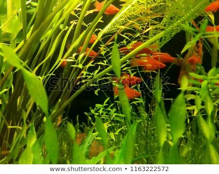 Grupo flutuante aquário natação subaquático água Foto stock © vlad_star