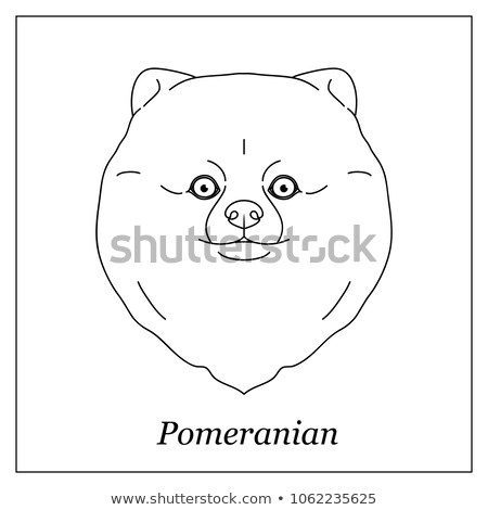 Isolated black outline head of pomeranian, german spitz on white background. Line cartoon breed dog  stock photo © olkita