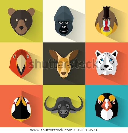 állat szett portré grafika majom arc Stock fotó © FoxysGraphic