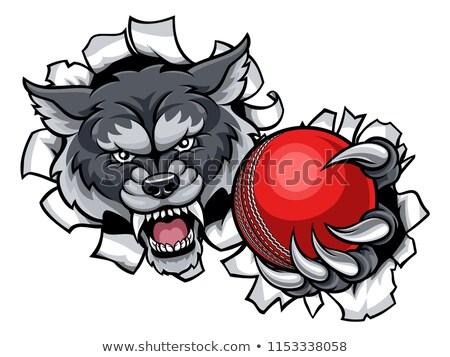 волка · крикет · талисман · сердиться · животного · спортивных - Сток-фото © krisdog