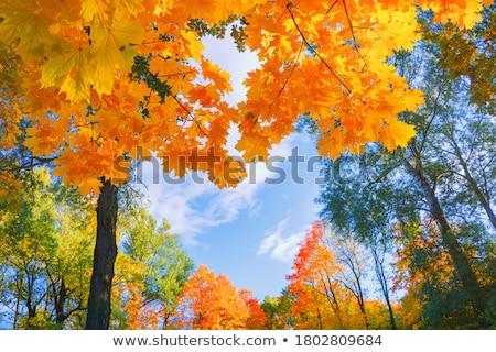 Dettaglio foglie verdi autunno foresta giallo albero Foto d'archivio © X-etra