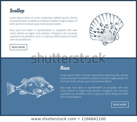Bass and Scallop Vector Double Color Graphic. Stock photo © robuart