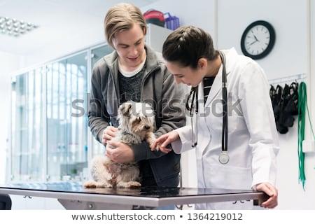 Yorkshire terriër kliniek veeartsenijkundig hand Stockfoto © Kzenon