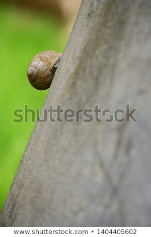 snails on the wall Stock photo © adrenalina