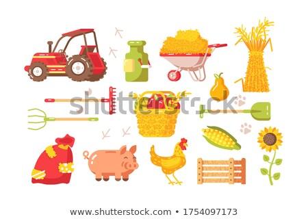 Jeans carrinho legumes trator girassóis Foto stock © robuart