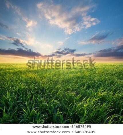 栽培 土地 フィールド 春 時間 青空 ストックフォト © simazoran