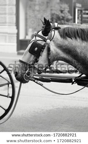 fiaker horse head with horse harness in vienna Stock photo © meinzahn