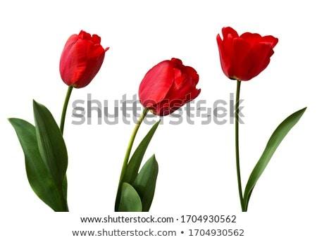 zárva · fehér · virágok · tavasz · bokor · virág · levél - stock fotó © juniart