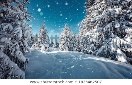 Snowy landscape Stock photo © olandsfokus