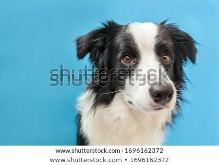 Lovely gaze Stock photo © pressmaster