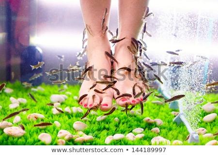 Hal fürdő fiatal lány lábak bent akvárium Stock fotó © ldambies