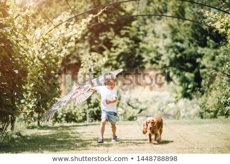 a little boy is playing with little dogs stock photo © galitskaya