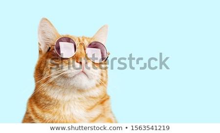 Jengibre gato retrato relajante cama mirando Foto stock © Kurhan
