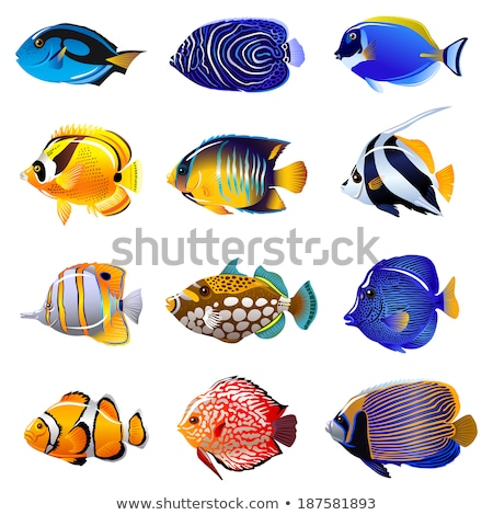 Set of saltwater Fish Stock photo © bluering