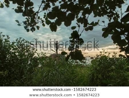 Paisagem ver descrição amarelo blue sky branco Foto stock © REDPIXEL