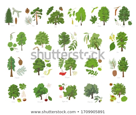 Set of trees with leaves Stock photo © kiddaikiddee