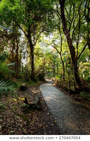Pathway In A Park Victoria Falls Zimbabwe In Spring Zdjęcia stock © Artush